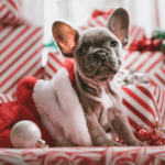 11 Easy Ways to Save this Christmas without becoming Scrooge!
